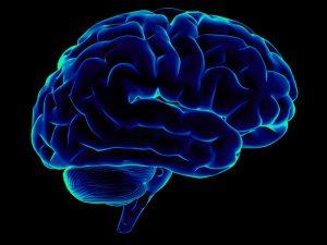 Brain Health - Your Wellness Centre